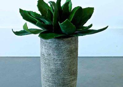 plante grasse dans un pot dans une ambiance moderne